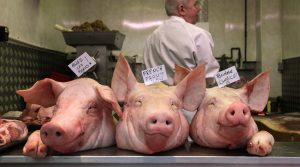 pigs heads