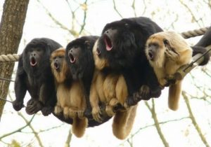 stupid-monkeys-singing